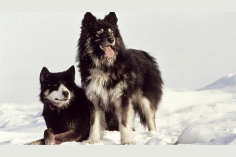 Антарктическая повесть, Nankyoku monogatari, 1983